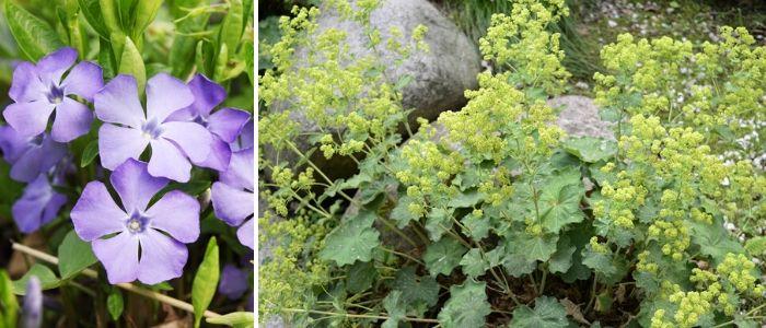 Vaste planten onderhoudsvrij - Sels Evergreen