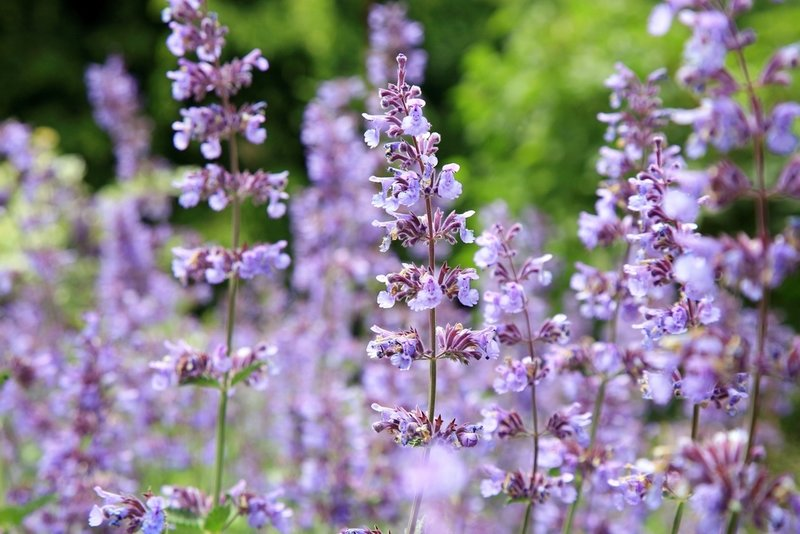 Beste Top 9 droogteminnende planten - Sels Evergreen UR-86